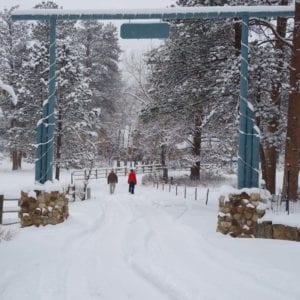 couple walks in winter wonderland