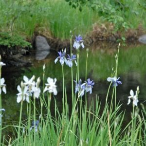 flowers by the pond in bloom