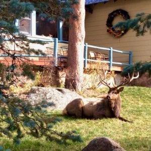 Elk in the sun