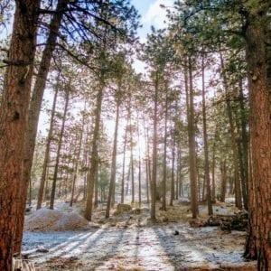 light through trees in winter