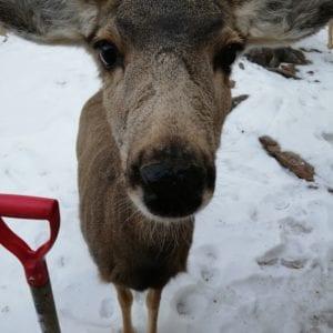 deer up close
