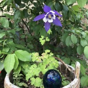flower in full bloom