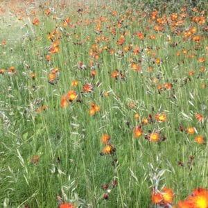 meadows in full bloom