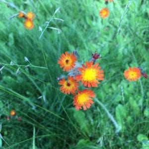 widlflowers at RiverSong