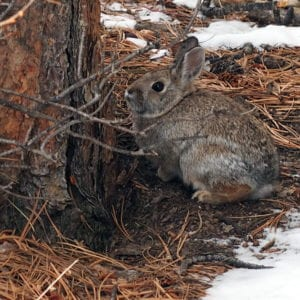 rabbit in the forest